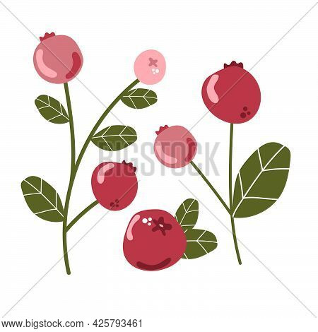 Set Of Cranberry With Leaves.  Forest Wild Berries, Fresh Delicious Ripe Berry Concept.