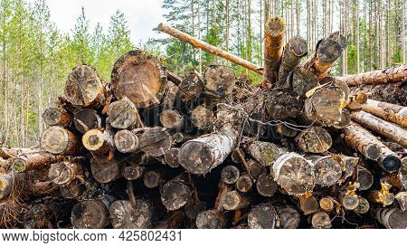 A Pile Of Felled Tree Trunks, Stacked In A Pile. Harvesting Of Lumber. Deforestation