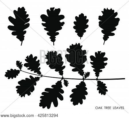 Black Silhouettes Of Oak Leaves Isolated On White Background. Autumn Fallen Leaves Of Oak Tree. Vect