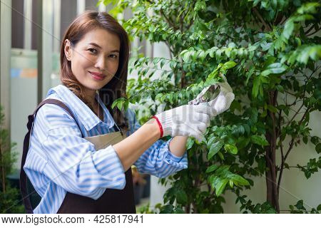 Beautiful Asian Woman Housewife In Apron Holding Pruning Shears Cutting Small Leaves Of Tree Outside