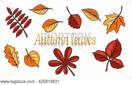 Autumn Leaves Big Set. Abstract Carved Leaves. Cartoon Style.