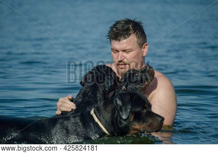 Man With Two Puppies In An Adult Female Dog Swimming In The Sea. Adult Male, Three-month-old Rottwei
