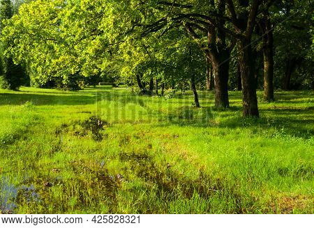 Summer forest landscape, sunset in the summer forest park, green summer trees lit by light, summer forest nature, summer forest landscape scene