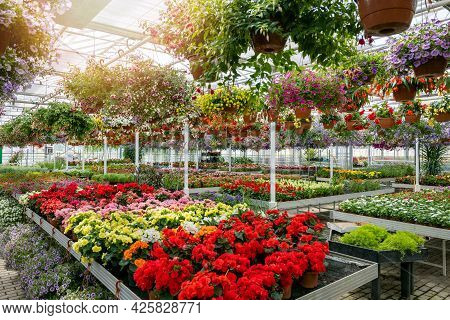 Large Garden Center Greenhouse With Flowers And Plants For Sale