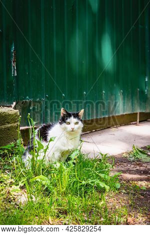 Black-white Coloring Cat Sits Near Fence In Village In Sunny Day. Country Life. Summer Country Backg