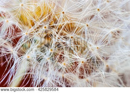 Macro Dandelion Seed On Colorful Background Of Summer Flowers. Selective Soft Focus. Bright Backgrou