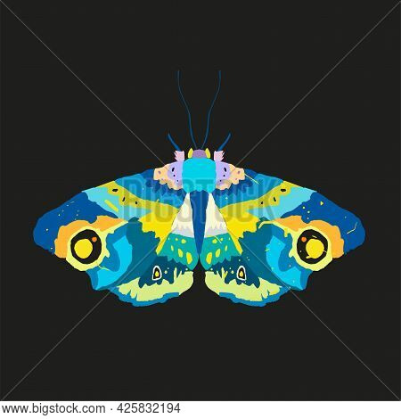 Colorful Moth, Insect With Color Decorative Wings