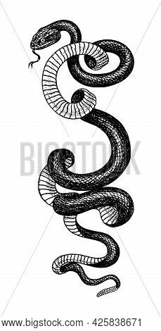 Pit Viper. Crotaline Snake Or Pit Adders. Venomous Reptilia Illustration. Engraved Hand Drawn In Old