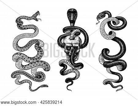 Snake In The Skull. Indian Cobra. Pit Viper. Spectacled Or Asian Or Binocellate. Venomous Reptilia I