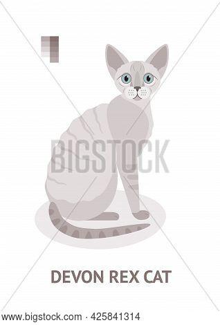 Devon Rex Cat - Vector Illustration In Flat Style