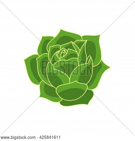 Succulent Echeveria Greenovia In Cartoon Style. Vector Illustration Plant Hand Drawn. Green Isolated