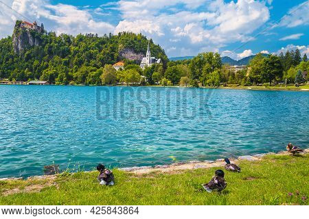 Amazing Panoramic View With Castle On The Cliff And Mallard Ducks On The Lake Shore, Bled, Slovenia,