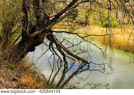 Tree With Roots In The Water And Reflections In The River Cabriel In Castilla La Mancha, Spain.