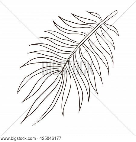 Tropical Organic Palm Leaf Line Art. Hand Drawn Exotic Rainforest Palm Leaves Vector Isolated Illust