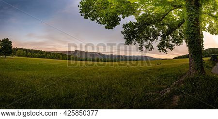 Tree With Large Canopy Of Green Leaves Looking Out Over Field In Cades Cove In The Smokies