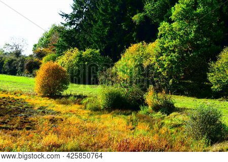 Dry Caldera With Swamp Character In Autumn Colors