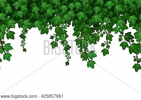 Green Ivyfoliage  Garland. Hanging Ivy Leaves, Summer Natural Plant Wall Background. Seamless Patter