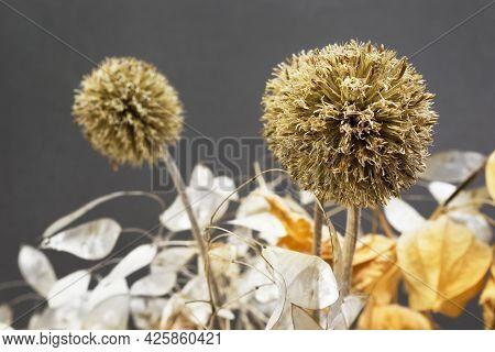 Dried Allium Flowers Closeup On Dark Backkground