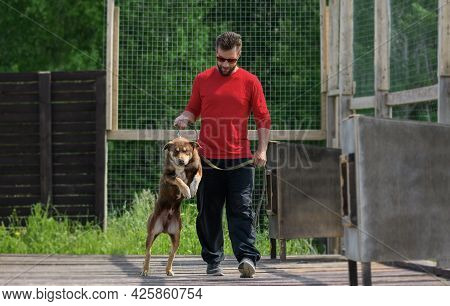 Caucasian Young Man And His Dog Are Walking In A Outdoor Enclosure. Red Alaskan Husky With A Collar
