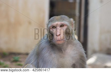 Monkey is a common name that may refer to certain groups or species of simian mammals of infraorder