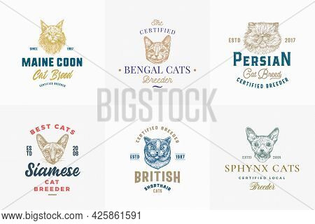 Cat Breeds Badges Or Logo Templates Collection. Hand Drawn Sphynx, Bengal, Siamese, Maine Coon And P