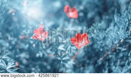 Small Red Flowers In Sunlight On A Toned Blue Background. Beautiful Summer Art Banner. Romantic Drea