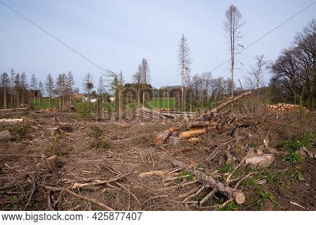 Panoramic Image Of Cleared Forest, Forest Dieback In North Rhine Westphalia, Germany