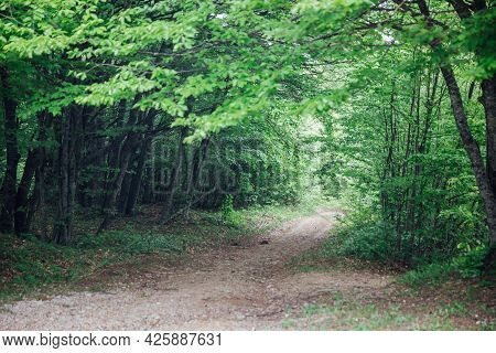 Empty Forest Road In Green Leafy Forest