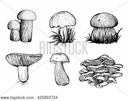 Set Of Forest Mushrooms. Edible Mushrooms , Russula, Chanterelles, Boletus. Hand Drawn Vector Illust