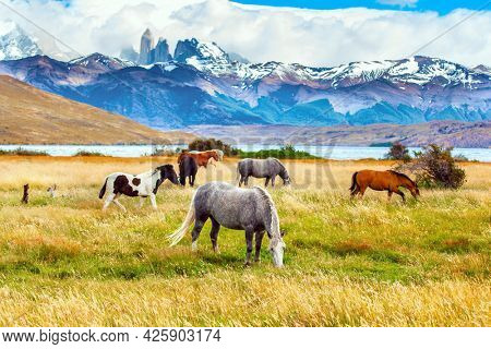 The Torres del Paine park in Chile. Herd of wild horses graze on the yellow grass. Lagoon Azul is mountain lake near three rocks - torres. The mountain range is covered with eternal snow.