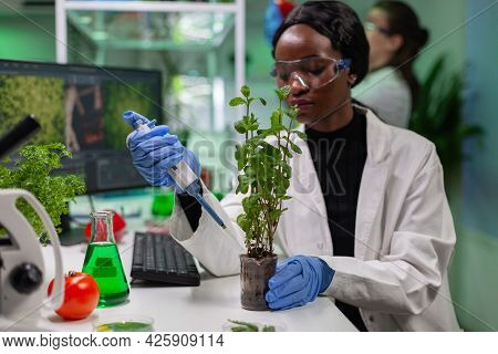 Biologist Scientist Talking Solution From Medical Flask On Green Sapling For Genetic Experiment. Wom