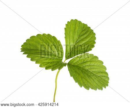 Fresh Strawberry Leaf On A White Background, Isolate, Close-up. Structure