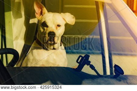 Dog In Rv Camper Car Looking Trought Window Pane. Motorhome Traveling With Pet. Danger Of Pet Overhe
