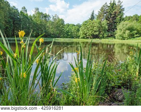 An Park Pond With And A Bed With Yellow Bright Flowers. Silent City Park