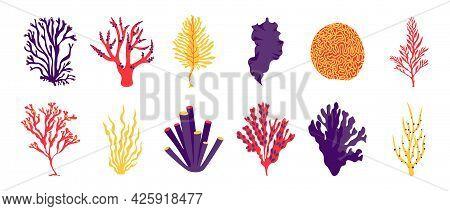 Algae. Cartoon Sea And Ocean Plants, Fantasy Seaweeds For Posters And Marine Products. Vector Algae