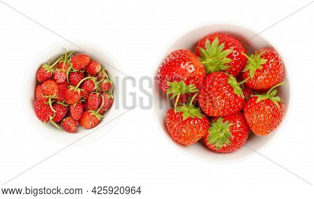 Wild And Garden Strawberries In White Bowls. Fresh, Ripe And Bright Red Fruits Of Alpine Strawberrie