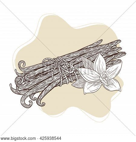 Hand Drawn Vanilla Blossom And Pods Sketch In Vintage Style For Logo, Recipe, Menu, Emblem, Tattoo,