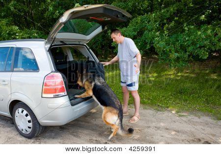 Dog Getting Into A Car