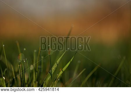 Green grass with morning dew at sunrise. Water drop, water on green grass. Beautiful grass with drops of water. Environment Concept. Photo of rain drops falling from a grass