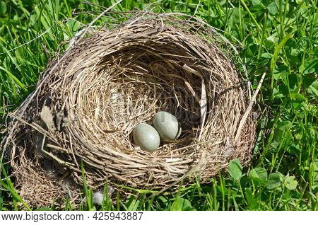 Thrush Eggs In A Nest On The Grass