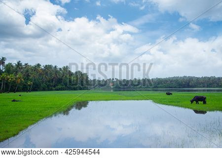 Lake Surrounded By Green Grass Field And Trees Under Blue Sky And White Clouds During Daytime Photo,