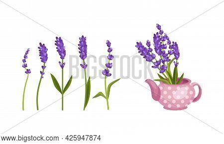 Lavender Fragrant Floral Twigs On Stem And In Vase Vector Set