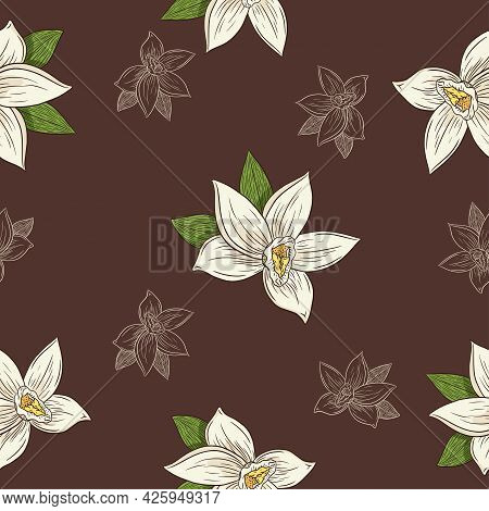 Hand Drawn Vanilla Flowers In Vintage Style Seamless Pattern For Background, Backdrop, Wrapping Pape