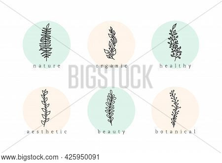 Botanical Minimalist Hand Drawn Floral Logo Elements Vector Set. Natural Doodle Branches With Circle