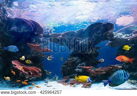 Tropical fish in coastal waters. Life in a coral reef. Ecosystem. Animals of the underwater sea world.