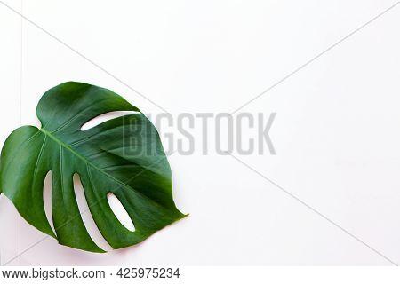 Big Green Leaf For Flower Arrangement. Monstera Leaf. Popular Choice Of Florist Using Exotic Jungle