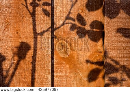 Brown Wood Wall Plank Texture Background With Light And Shadow Of Branches Of Rose In The Morning, F