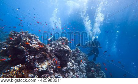 Beautiful Underwater World Silhouettes Of Scuba Divers Can Be Seen On The Background From Behind
