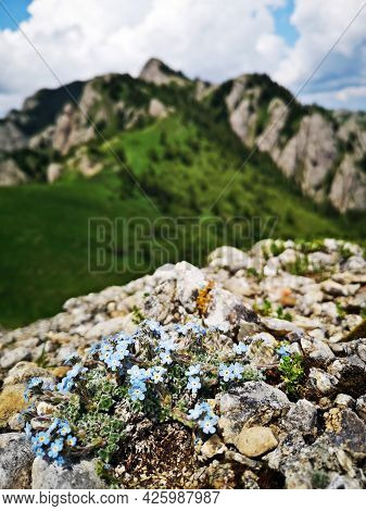 Summer In The Mountains. Rocks And Flowers