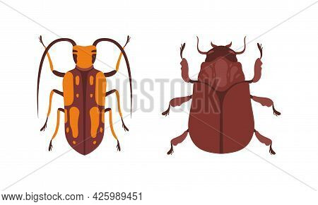 Bug Species Set, Top View Of Bugs, Beetles Insects Cartoon Vector Illustration